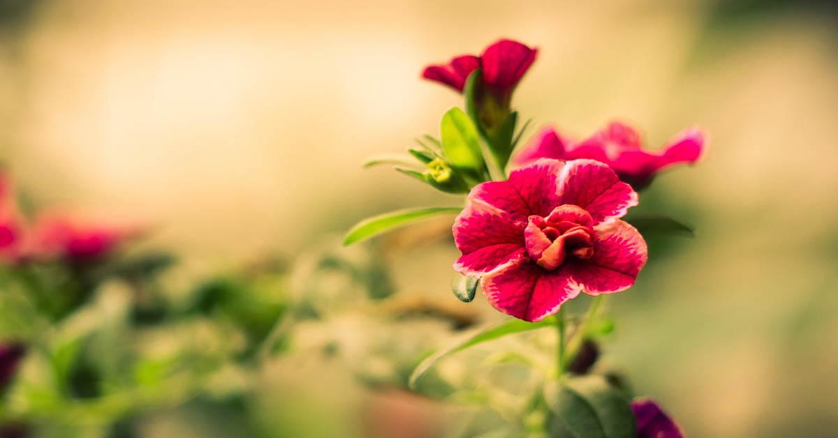 Çiçek İsimleri Ve Anlamları