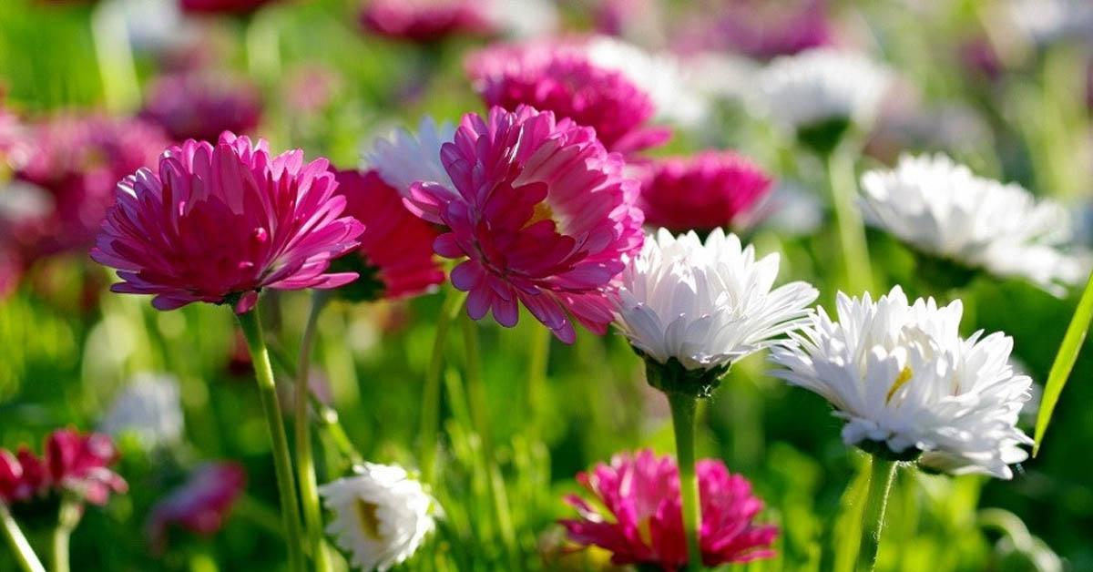çiçeklerin Gizemli Kokusu