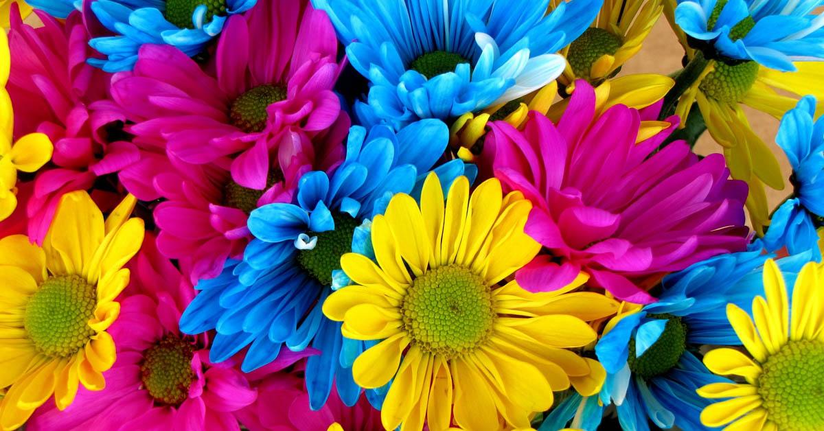 Çiçeklerin Renkleri