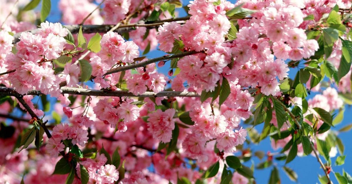 Mevsimlere Göre çiçekler